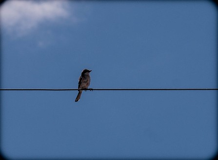 BIRD & WIRE-9758