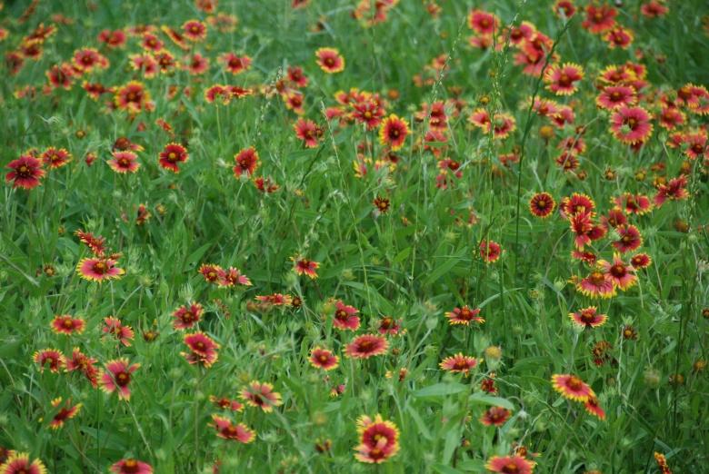 DSC_0034+wildflower+1